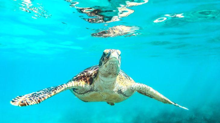 出会えれば幸運が訪れる。神秘的なホヌが見れるハワイのビーチは?