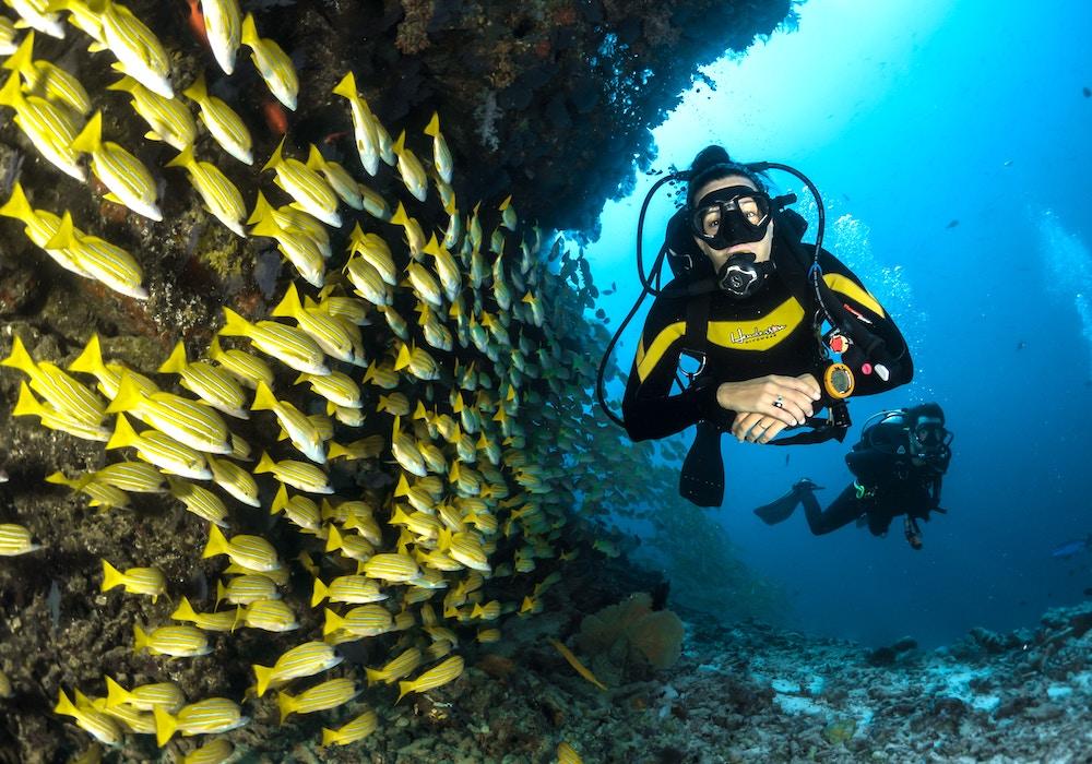 スキューバダイビング中の海底の様子