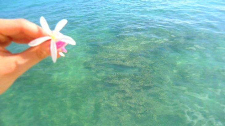 自然に甘い!ハワイで身近なプルメリア香る注目アイテム3点紹介!【Plumeria】