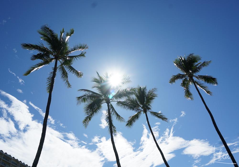 カラカウア通りの椰子のき