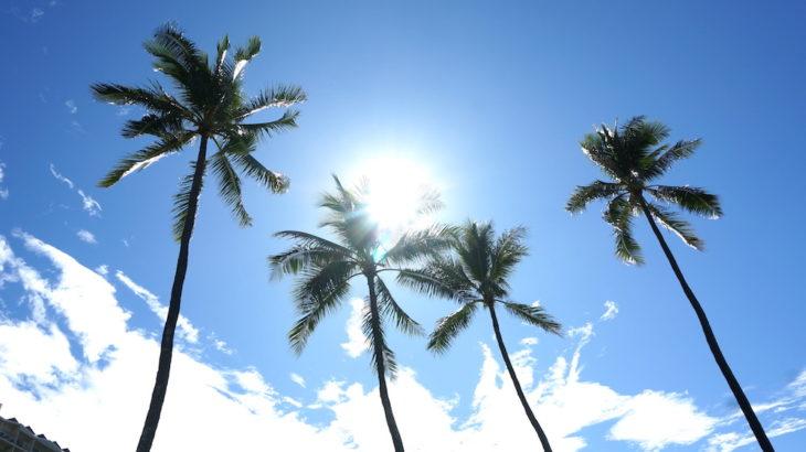 ハワイのヤシの木